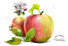 Apples, flowers and splashes. Of watercolor painting Stock Images