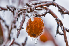 Apples in freezing rain -  Royalty Free Stock Images
