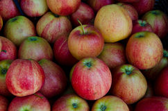 Apples. Fresh Red and green Apples Stock Image