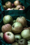 Apples. Fresh apples stored in bags Stock Image
