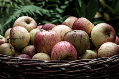 Apples. Fresh apples stored in a basket Royalty Free Stock Images