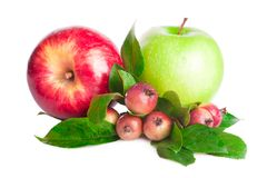 Apples fruit Stock Images