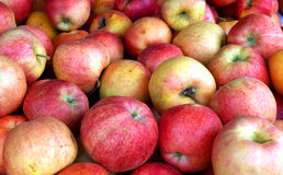 Apples. Fuji Apples at a local farmers market Stock Photos