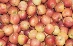Apples Gala rubbish. Stock Image