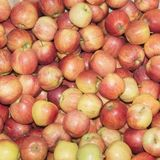 Apples Gala rubbish. Royalty Free Stock Images