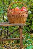 Apples  in  garden Royalty Free Stock Photos