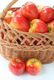 Apples from garden Stock Photography