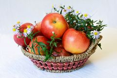 Apples from garden. Best fresh vitamins Stock Photography