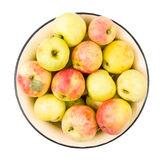 Apples garden isolated Royalty Free Stock Photo