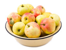 Apples garden isolated Royalty Free Stock Photography