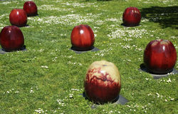 Apples glazed ceramic sculpture by Gustav Kraitz in De Young Museum in San Francisco Stock Image