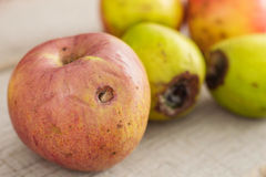 Apples are going to rot on floor. Royalty Free Stock Photo