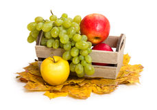 Apples and grape in crate on autumn leaves Stock Image