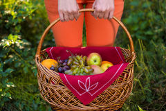 Apples and grapes basket, holded by woman hands Stock Photo