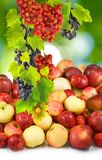 Apples and grapes on a green background Stock Images