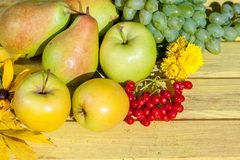 Apples, grapes, pear and red viburnum Royalty Free Stock Images
