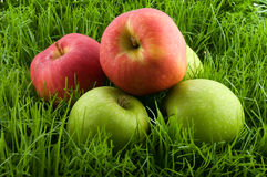 Apples in the grass. Royalty Free Stock Photography