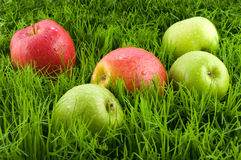 Apples in the grass. Stock Photos