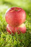 Apples on the grass. Two wet apples on the grass royalty free stock photography