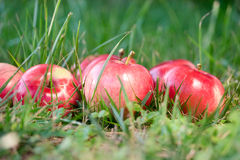 Apples in the grass Royalty Free Stock Images