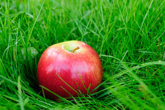 Apples in grass Royalty Free Stock Photos
