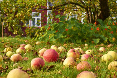 Apples on the grass Royalty Free Stock Images