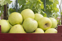 Apples. Green apples , wooden box with apples Stock Photos