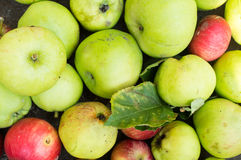 Apples Royalty Free Stock Photos