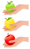 Apples in the hand different colors Royalty Free Stock Image