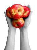 Apples at hands. Red apples at human hands Royalty Free Stock Photos