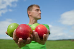 Apples in the hands of a guy Royalty Free Stock Image