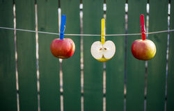 Apples hanging on the rope to dry Stock Photos
