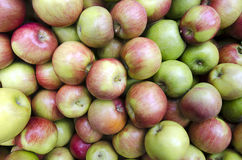 Apples at Harvest Royalty Free Stock Photos