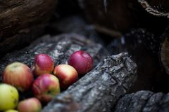 Apples. Harvest of ripe apples from the garden Royalty Free Stock Image