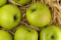 Apples in the hay. Green apples in the hay royalty free stock photography
