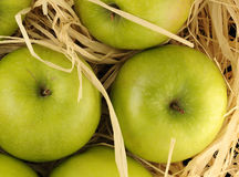 Apples in the hay. Green apples in the hay stock photos