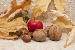 Apples with hazelnuts and walnuts Stock Images