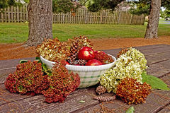 APPLES & HYDRANGEAS IN THE FALL Stock Photos