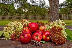 APPLES & HYDRANGEAS IN THE FALL Royalty Free Stock Image