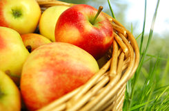 Free Apples In A Basket Stock Photo - 21763580