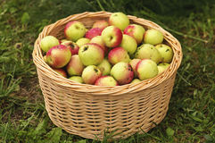 Apples In Basket Royalty Free Stock Photos