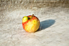 Apples with interresting deformations give fantasy a chance Stock Image