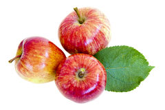 Apples isolated Royalty Free Stock Photo