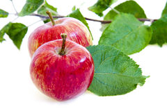 Apples isolated Royalty Free Stock Images