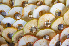 Apples on a lattice dryer. Apples are put on the grate dryer royalty free stock image
