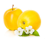 Apples with leaf and flowers Royalty Free Stock Photography