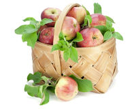 Apples with leaves in basket Stock Photos