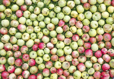 Apples lie on a grass green  lawn Royalty Free Stock Image