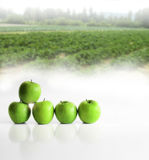 Apples in a line Royalty Free Stock Photography