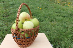 The apples lying in a wattled basket on a table in a garden Royalty Free Stock Photo